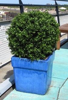 artificial plants - dubai, abu dhabi, uae Artificial Outdoor Plants